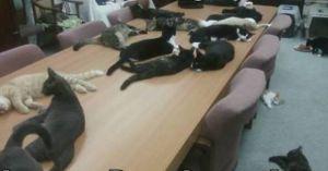 cats run the meeting