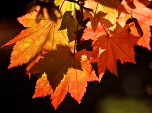autumn-leaf-background-