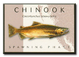 Chinook Salmon : Spawning Phase (DFO)