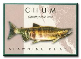 Chum Salmon: Spawning Phase (DFO)